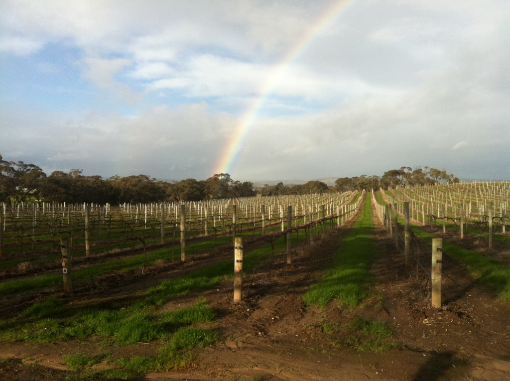 Cold and colourful Barossa